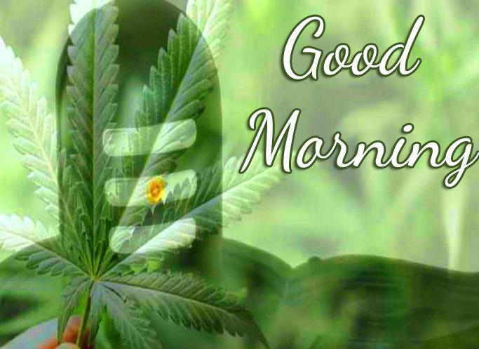 Mahadev HD Good Morning Photo